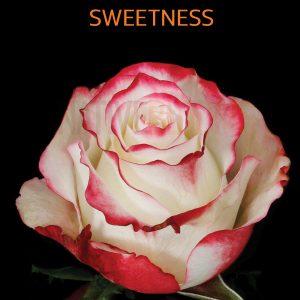 sweetness-roses